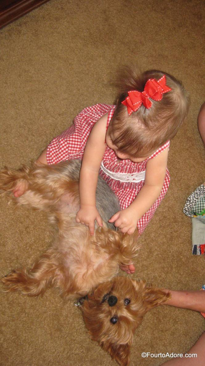 Lily is the kind of dog who lets Sydney rub her belly (with supervision).