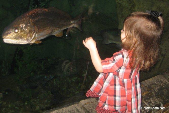 Bass Pro Shop aquarium
