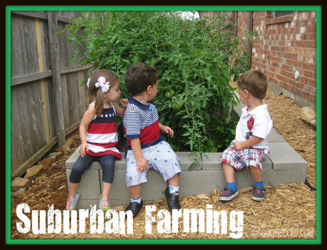 We live on a small lot, but manage an herb garden, veggie garden, and bantam chickens.